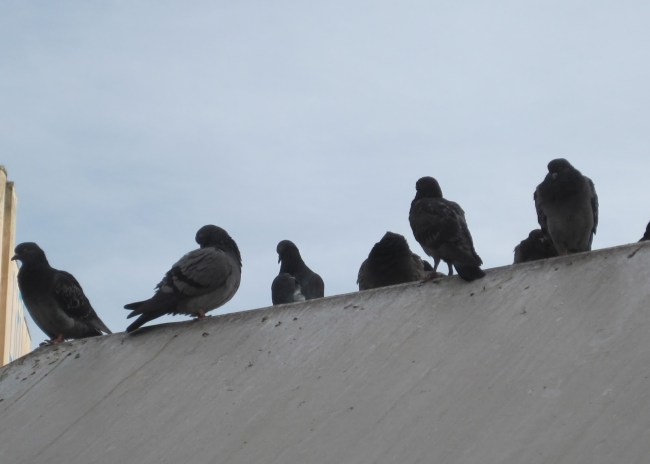Τα «κοράκια» συνεχίζουν να πετούν πάνω από τον ΟΦΗ…