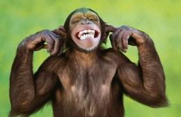 Προσοχή: Κυκλοφορούν μαϊμού επενδυτές τύπου Μοντεκάλβο