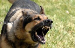 Ηράκλειο: Σκύλος επιτέθηκε σε δίδυμα 11 χρονών