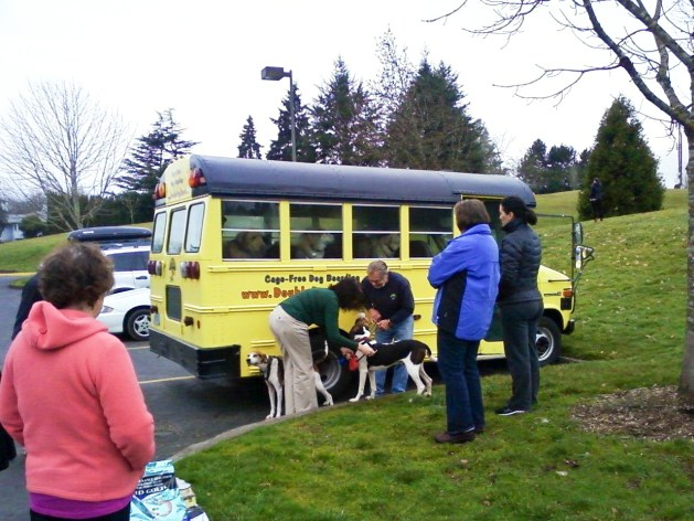 Dogs coming home from camp on a mini-bus