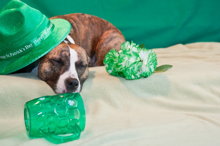St. Patrick's Day Hangover Remedies You Should Try