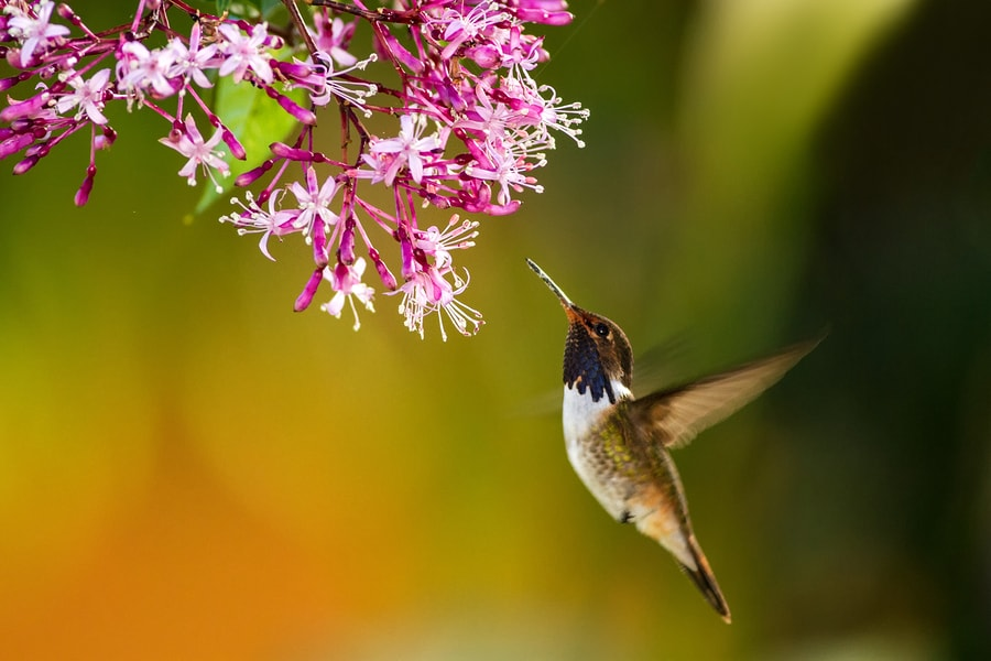 Use These Tips To Attract Hummingbirds to Your Garden