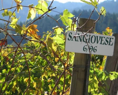 Sangiovese Vineyard