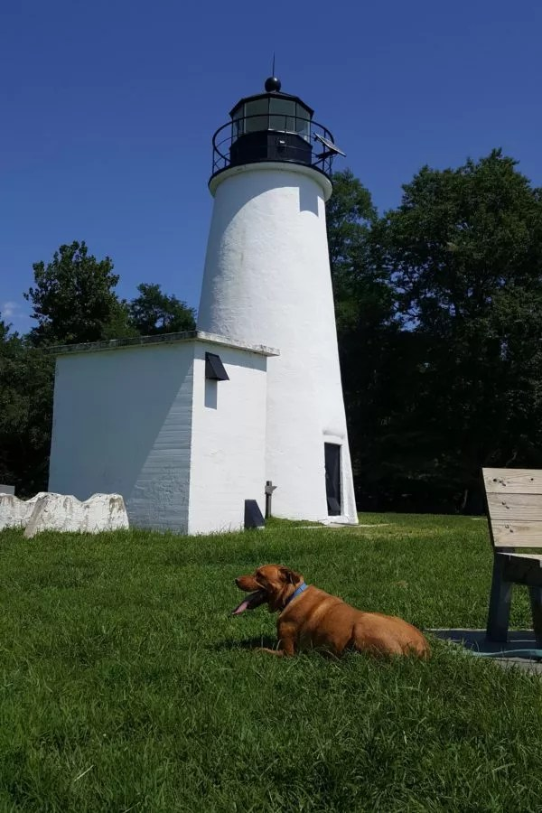 Dog at Turkey Point Lighthouse