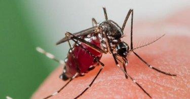 Choisir les meilleurs anti moustiques de voyage