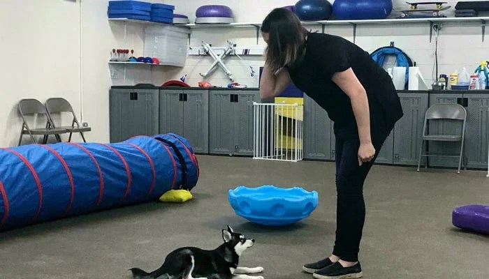 Dog trainer Hannah Richter works with Lucy at the Beasty Feasty store in New York, US. — AFP/File