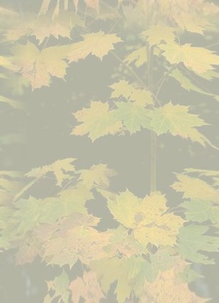 Fall Leaves Wallpaper Border Nature And Floral Backgrounds