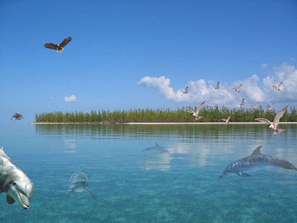 Fall Desktop Wallpaper Themes Dolphin