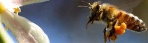 bee and bat