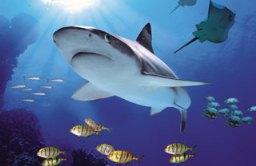 ocean-shark