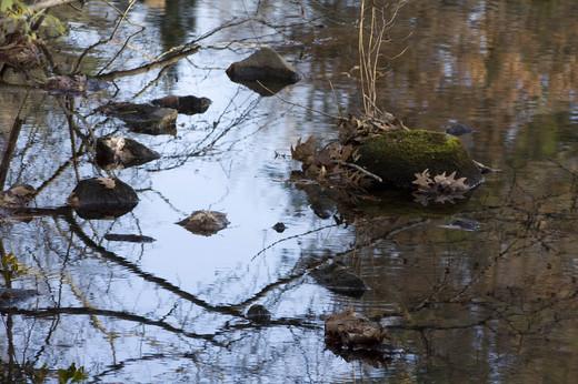 Jepps Brook mill pond still fall day