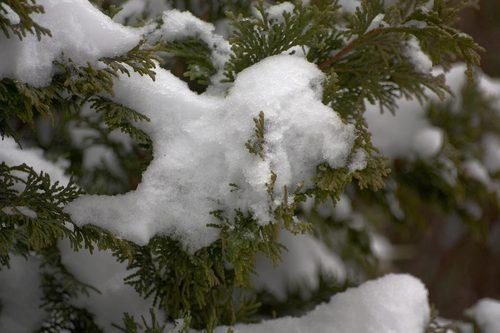 clustered-snow.jpg