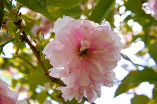 macro-pink-flower-1.jpg