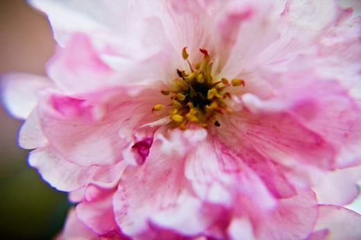 macro-pink-flower-2.jpg