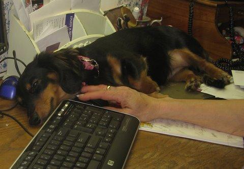 roxie at the keyboard.jpg