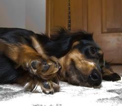 roxie-resting-on-her-side.jpg