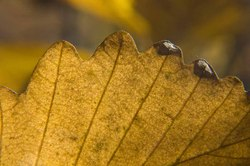 sleeping-giant-macro-leaf.jpg