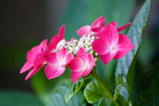 some-pink-flowers.jpg