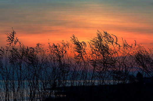 stratford-beach-at-sunset-through-tall-grass.jpg