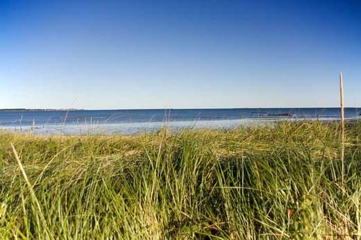 west-haven-beach-through-the-weeds.jpg