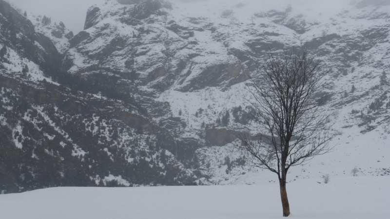 Dia d'hivern a Pineta