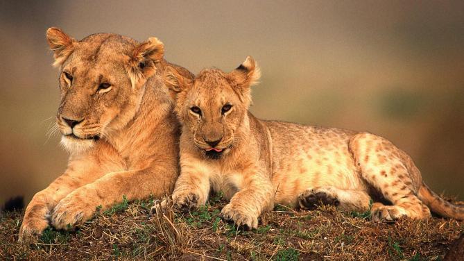 Kenya Turları