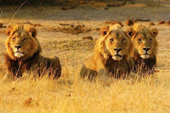 Botsvana Turları
