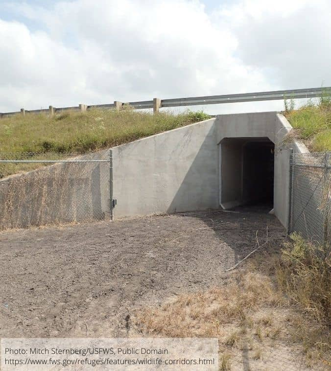 A wildlife underpass at Laguna Atascosa National Wildlife Refuge in south Texas.  Photo: Mitch Sternberg/USFWS, public domain.