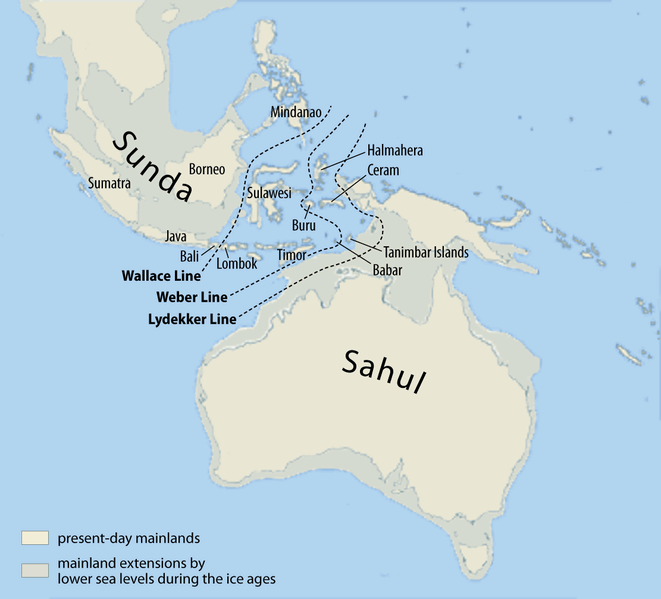 Map showing the Wallace line, which delineates Australian and Southeast Asian fauna