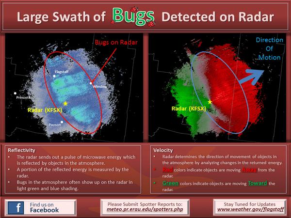 bugs-radar