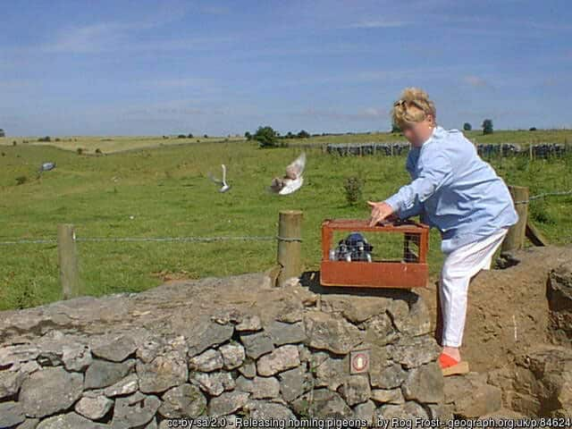 Releasing homing pigeons near Priddy.  © Copyright Rog Frost and licensed for reuse under this Creative Commons Licence. Face blurred for privacy.