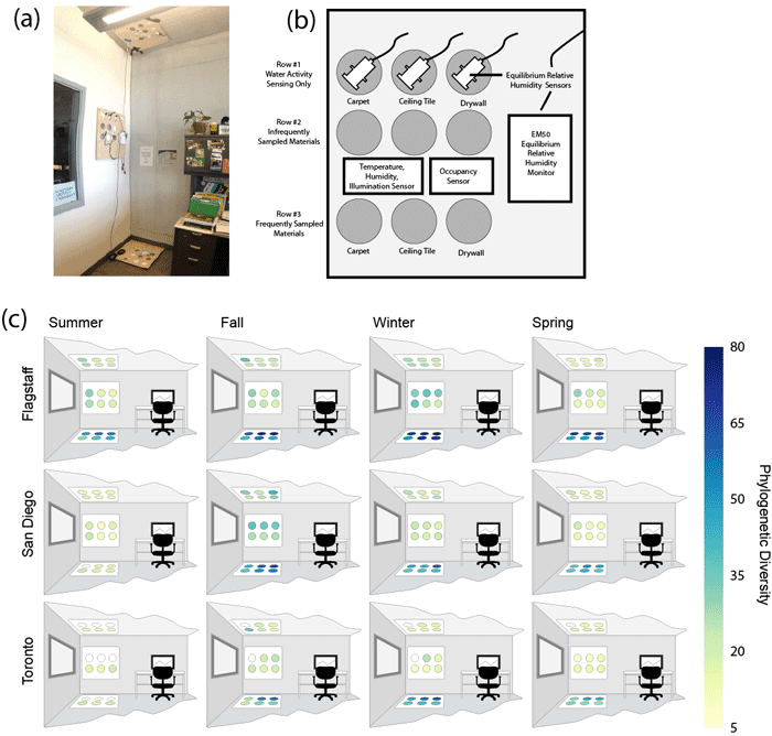 (a) Configuration of sampling site in Flagstaff office 1. This configuration was similar to those set up in all offices. Signs on the wall adjacent to wall sampling plate describe the project, as request that the materials not be touched. (b) Diagram of single sampling plate illustrating nine sampling swatches (circles) of three different materials, one row for tracking equilibrium relative humidity of the materials (Row #1), one row for infrequent sampling (Row #2), and one row for frequent sampling (Row #3). (c) Samples were collected from rows 2 and 3 of all sampling plates from three offices in each of our three cities in four intensive sampling periods over the course of one year. Coloring of sampling swatches in this figure illustrates the change in bacterial Phylogenetic Diversity over the year.