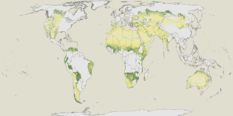Map showing forest distribution in drylands. Yellow areas are plots without forests and green areas are plots with forest cover. Source: Bastin et. al, 2017).