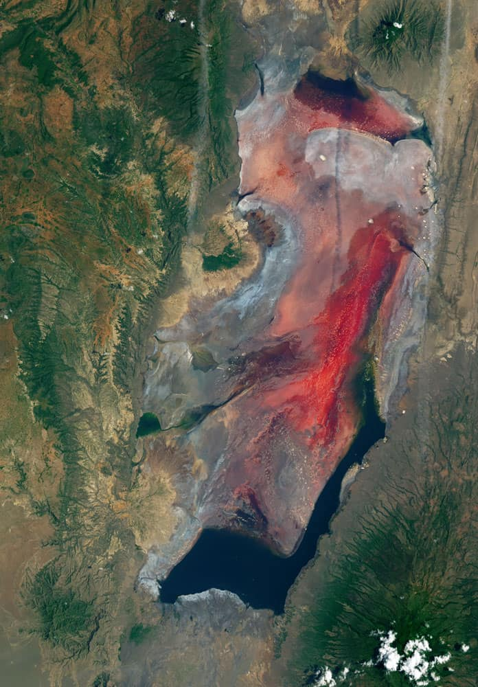Haloarchaea are salt-loving microorganisms that impart the pink and red colors of Lake Natron in Tanzania. Image: Landsat 8 acquired March 6, 2017.