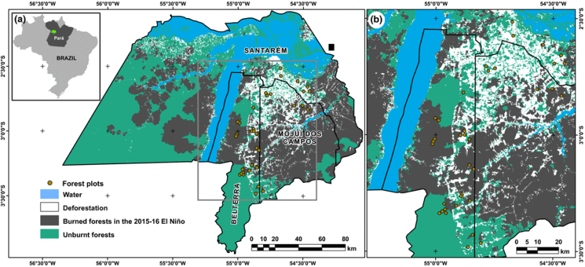 Map showing the location of the researchers' study region in the eastern Brazilian Amazonia. Around 8,072 km2 of primary forests from the total area in the map (ca 27,418 km2) were burned during the 2015–16 El Niño event. Source: França et al., 2020.