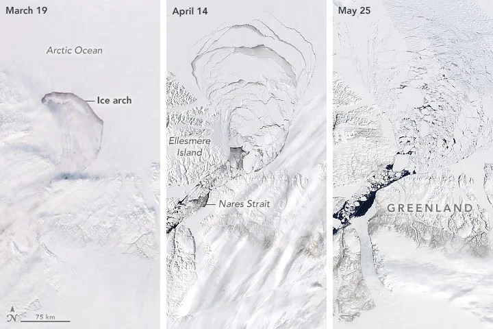 In March the ice arch starting to disintegrate. By April, satellite imagery was showing the crumbling of the ice pack behind the ice arch. By May, sea ice was flowing freely through Nares Strait. Images: NASA.