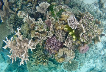 A coral garden below my standup paddleboard