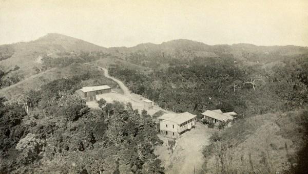 Coffee plantation in Mayagüez.