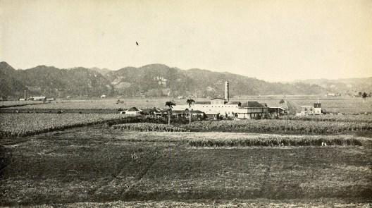 Sugar mill and plantation in Manatí (ingenio).