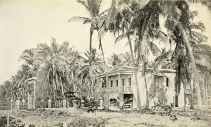 Cocoanut farm in Mayagüez.