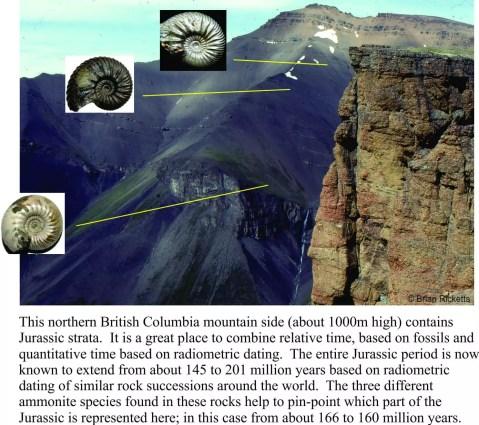 half life Tsatia ammonites