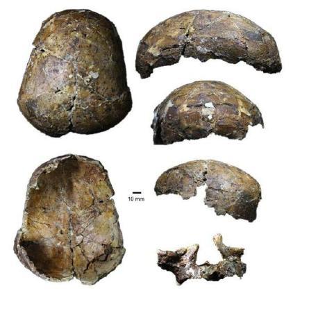 Ancient Deep Skull-GeologyPage