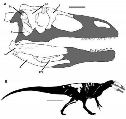 New dinosaur species may give-GeologyPage