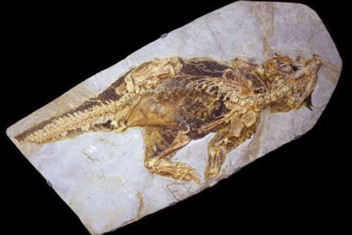 Psittacosaurus, early Cretaceous (120 million years old), preserving skin with colour patterns, Senckenberg Museum, Frankfurt, Germany. Credit: Jakob Vinther and Robert Nicholls