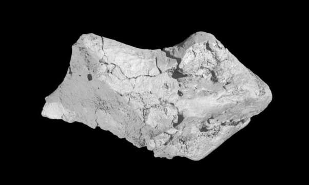 Surface scanned image of the unassuming 'pebble' recently revealed to be a roughly 133 million-year-old fossil dinosaur brain, discovered in Sussex, England. Credit: Society of Vertebrate Paleontology