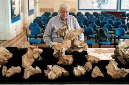 The Director of Earth Science Museum Diogenes de Almeida Campos shows the biggest piece of fossil of the Austroposeidon magnificus dinosaur's neck.