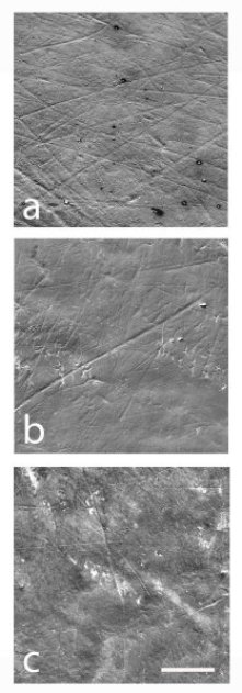 Well-preserved buccal microwear surfaces in which buccal striations could be measured. Credit: Martínez et al (2016)
