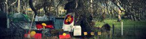 Djap Wurrung tree