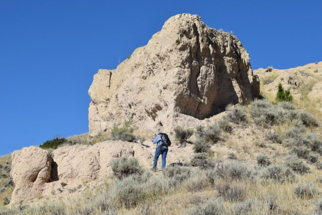 Late Tertiary outcrops north of Whitehall, Montana, yielded some interesting horse and camel remains.