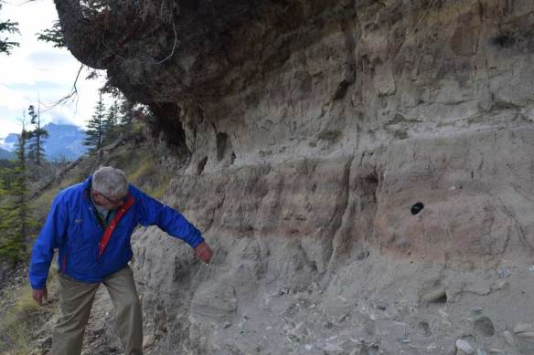 Mazama and Bridge River volcanic ashes exposed in bank cut near Saskatchewan Crossings.